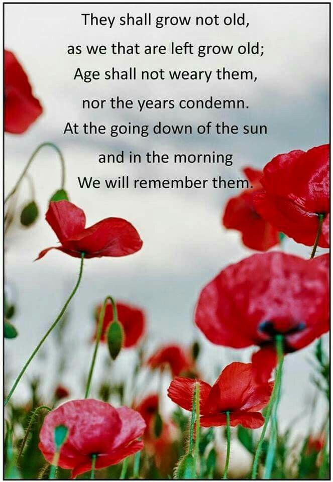 We will remember them | Anzac day quotes, Remembrance day quotes, Remembrance day poppy