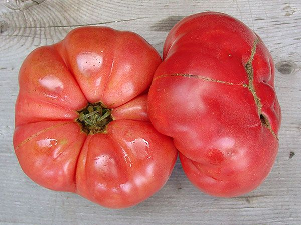 These Were Used Fresh And For Canning They Have A Delectable Sweet Flavor And Are A Beautiful Coral Pink Color Tomato Heirloom Seeds Colorful Vegetables