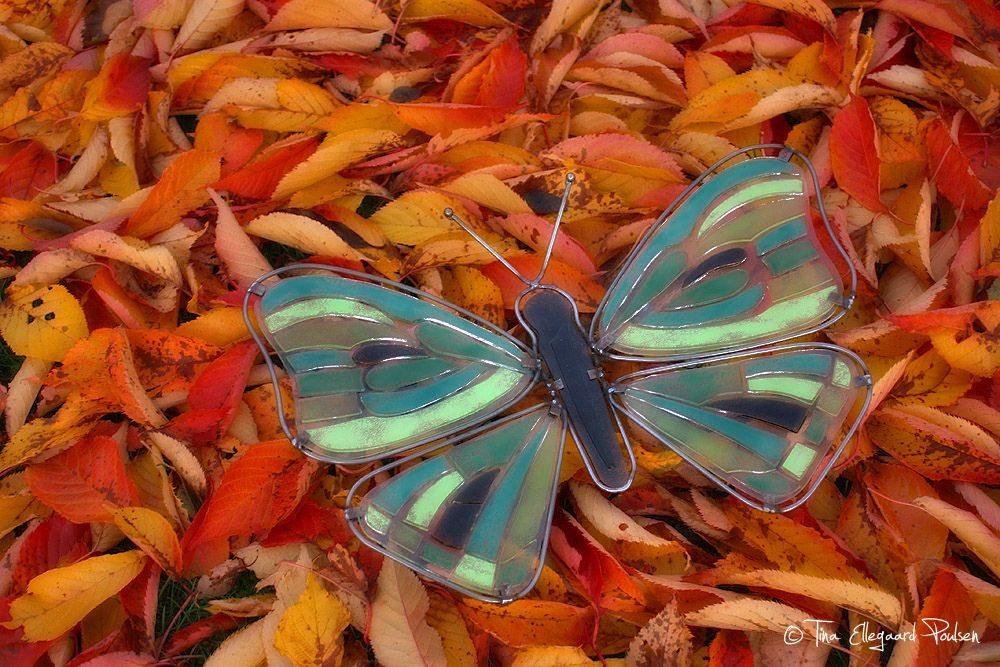 My huge glass butterfly. A really funny project to do!