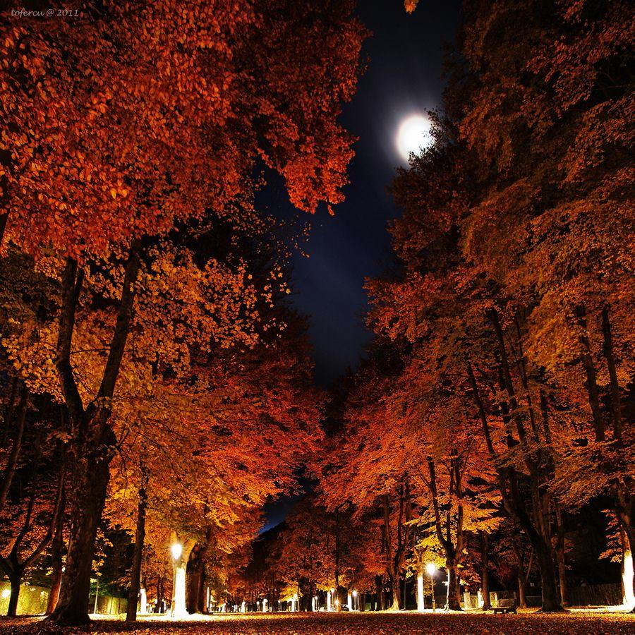 Fall night fall into autumn pinterest fall nights autumn and moon