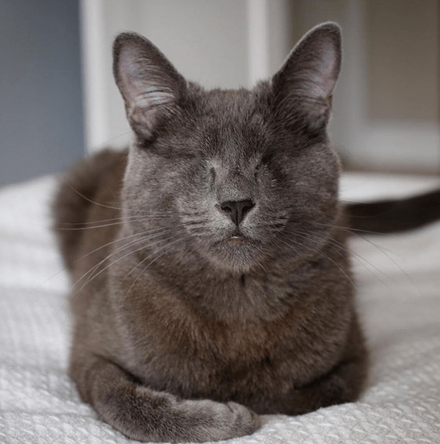 Meet The Handsome Blind Cat Who Convinced His Awesome Parents To