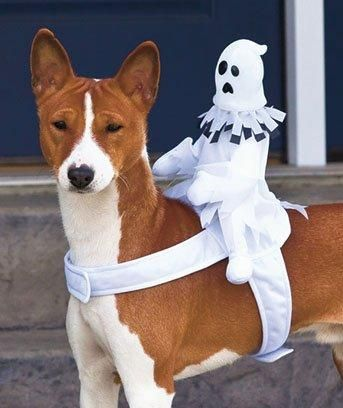 The Best Ghost Costumes Dog Halloween Costumes Dog Halloween