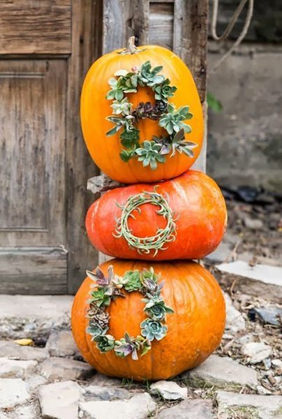 Succulents and Pumpkins . . .Yes please!