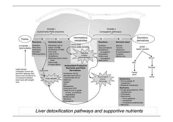 Liver detox pathway pathways pinterest liver detox detox and liver detox pathway ccuart Gallery