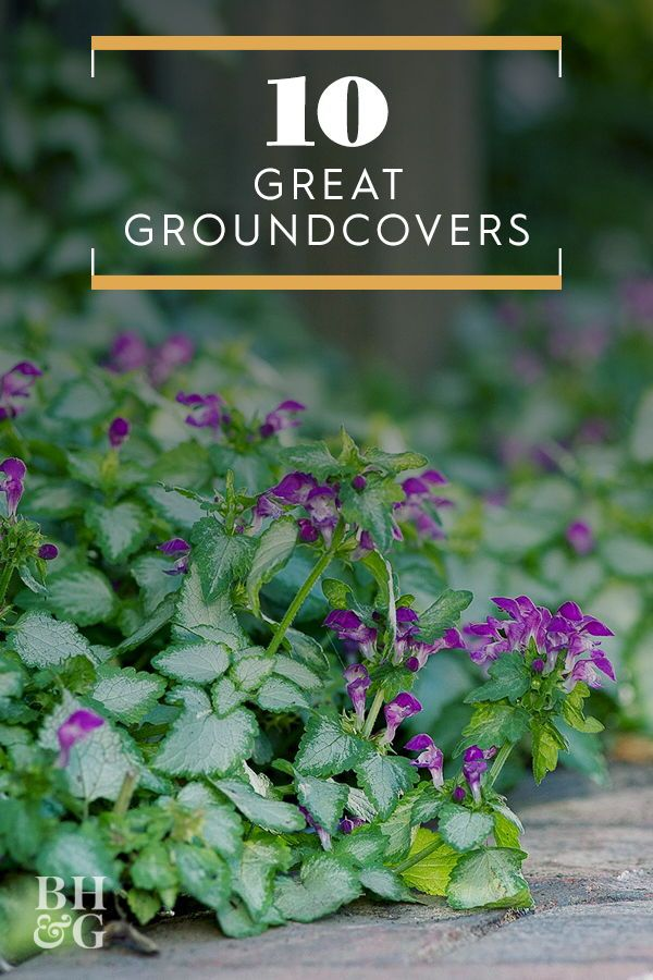 10 Great Groundcover Plants #landscapingtips