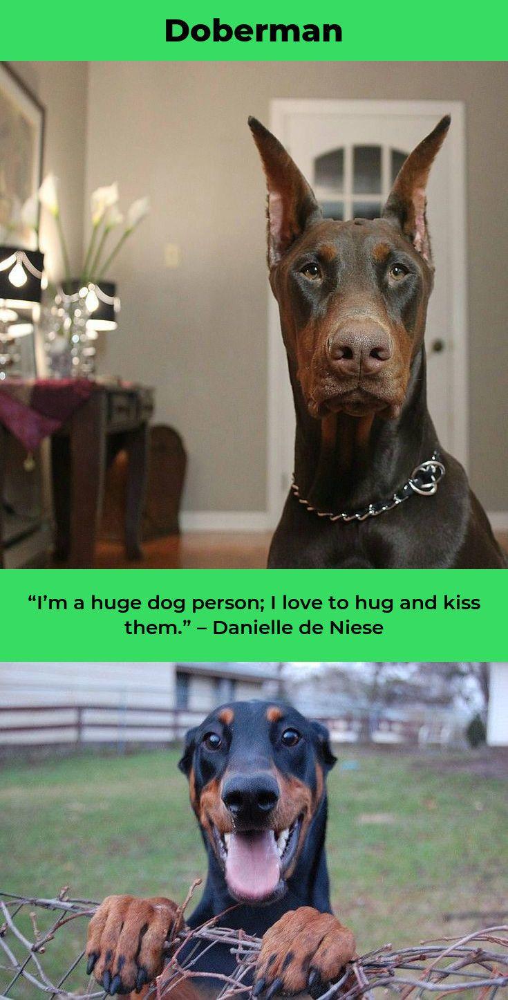 Litter Of 7 Doberman Pinscher Puppies For Sale In Hopewell Va