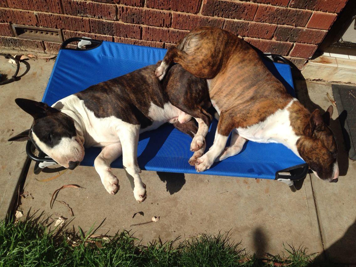 Tyrone and Winnie enjoying the sunshine