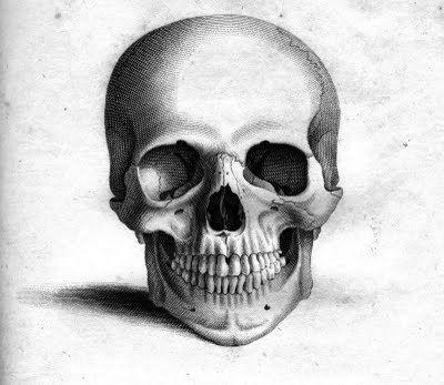 Henry-moore-drawings-skull-i9_large | Favourite art | Pinterest