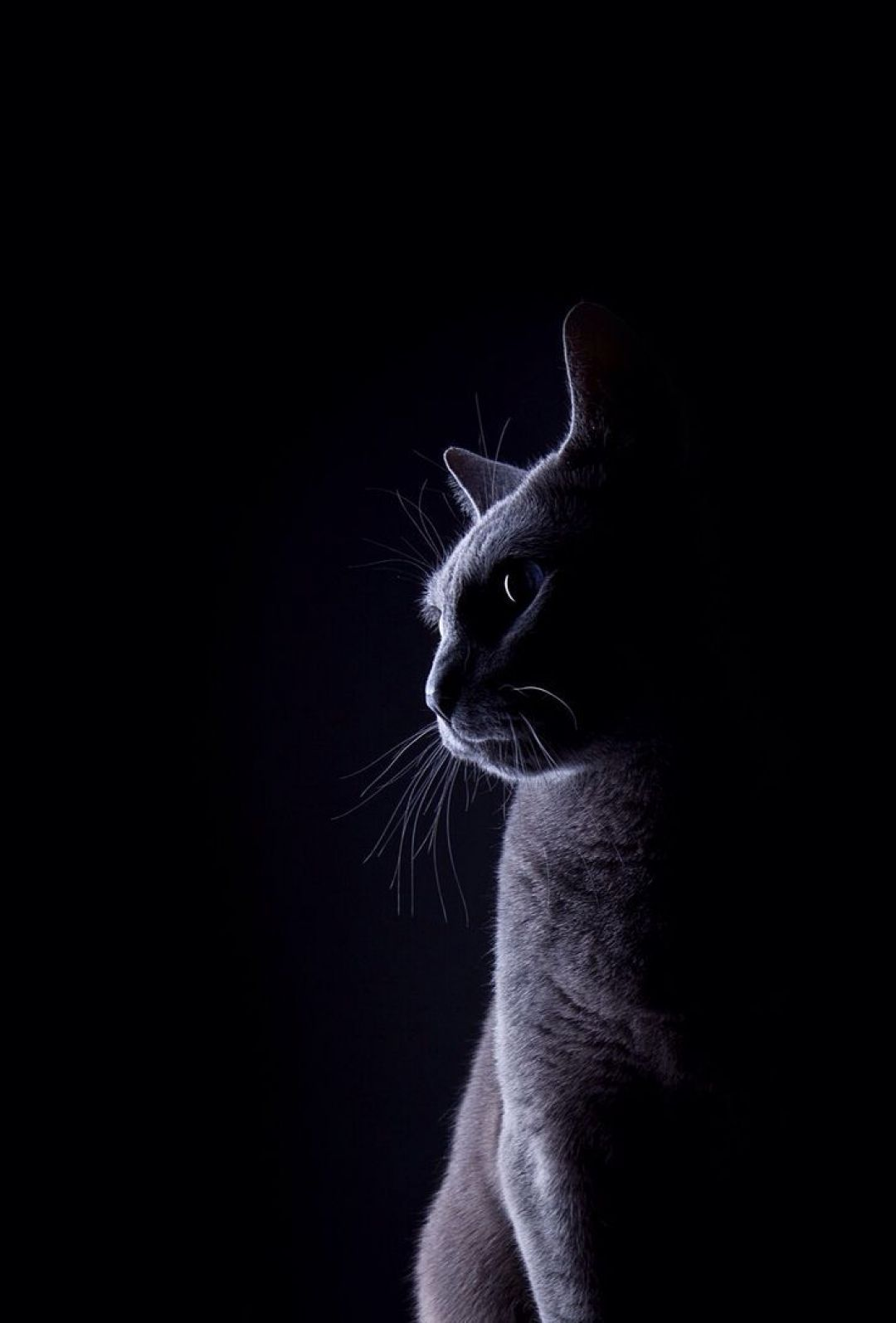 Cat Phone Android Iphone Desktop Hd Backgrounds Wallpapers 1080p 4k 101441 Hdwallpapers Androidwallpapers Iphon Animals Cats Cat Phone Wallpaper