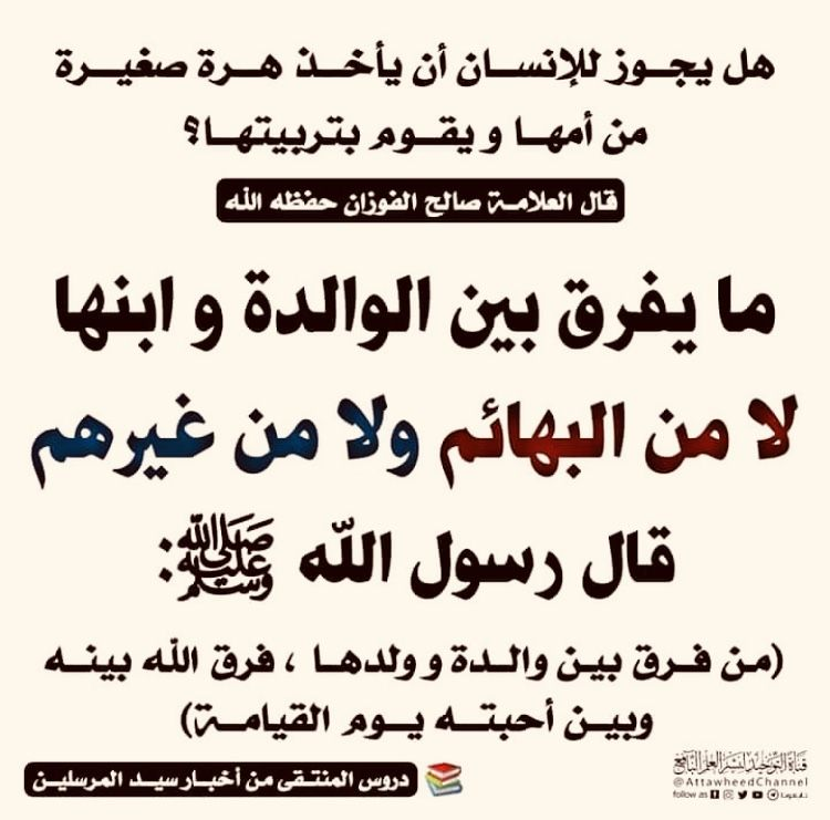 التفريق بين البهائم او البشر Arabic Calligraphy Calligraphy
