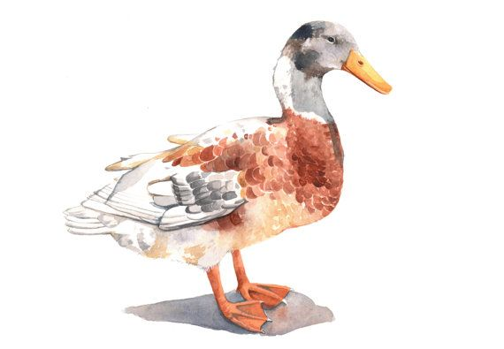 Duck painting D068 PRINT of watercolor painting 5 by Splodgepodge, $15.00