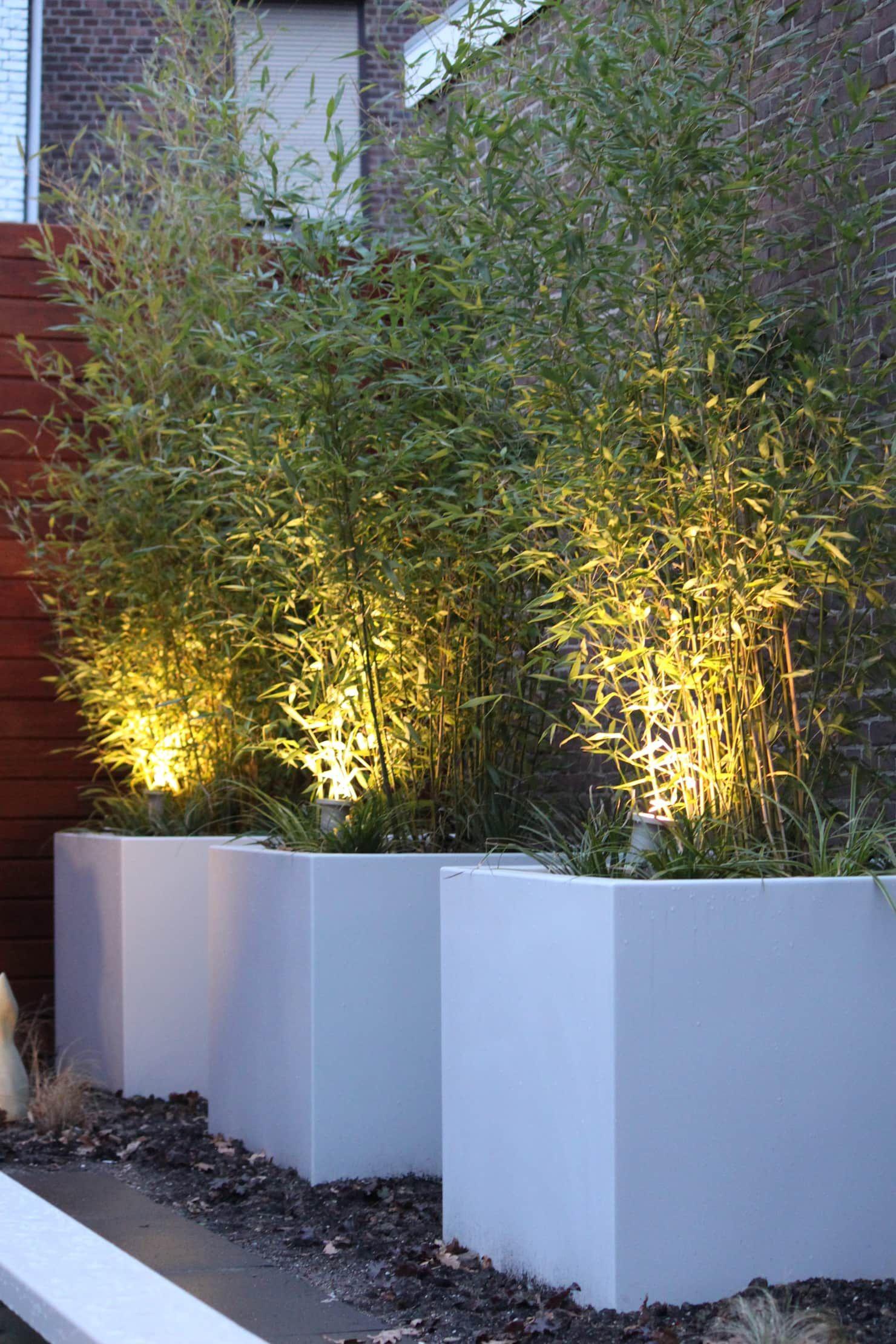 Bloembakken met bamboe moderne Tuin door Guy Wolfs Hoveniersbedrijf