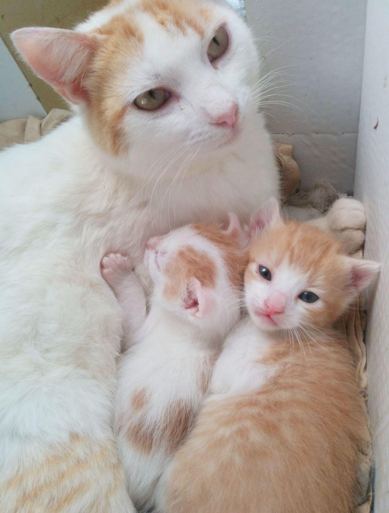 Happy Hanukkah Pretty Cats Cute Cats And Kittens Kittens