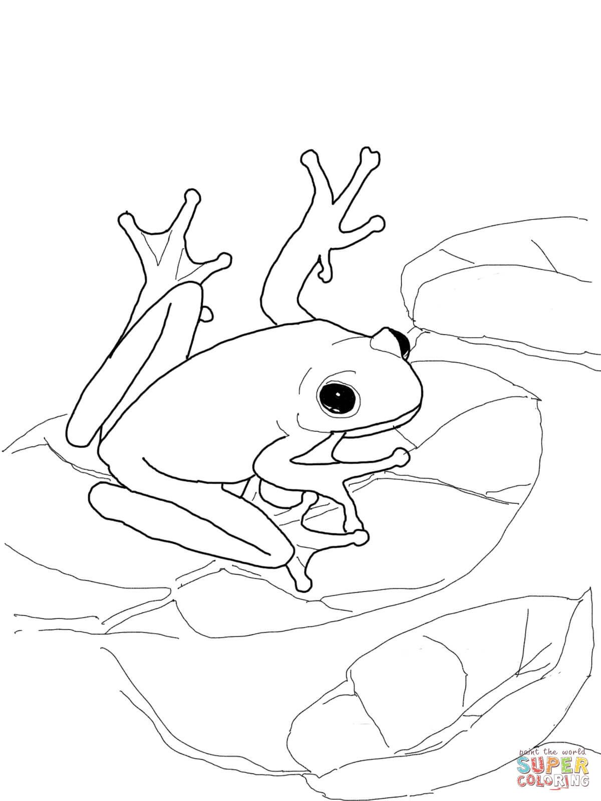 american-green-tree-frog-coloring-page.jpg (1200×1600) | coloring ...