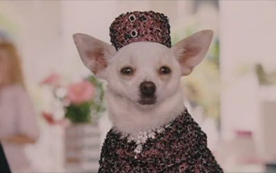 Chloe In Pill Box Hat And Jacket Beverly Hills Chihuahua Movie