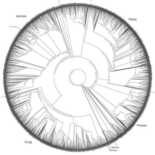 Tree ring of life. By far the most complex of the tree of life ...