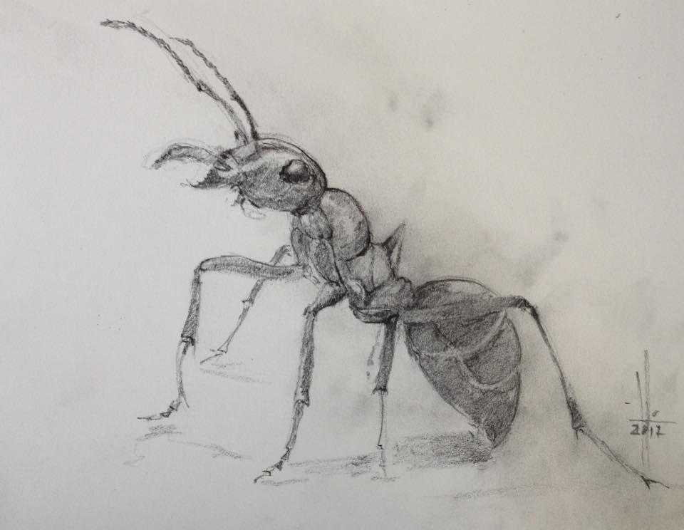 Муравей с карандашом картинка