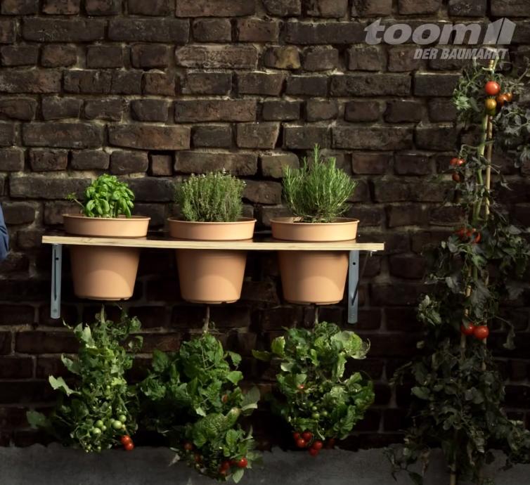 Gartentomaten können sowohl im Garten als auch in Gefäßen