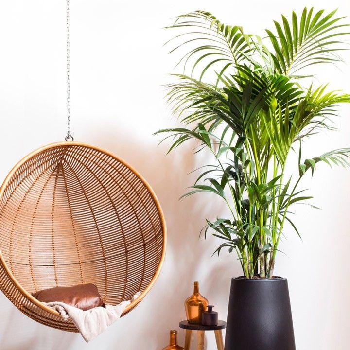 Een grote plant als stralend middelpunt van je woonkamer! #intratuin ...