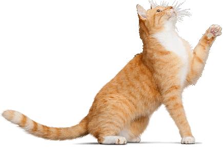 catwet 435×300 pixels  cat pose crazy cats cats