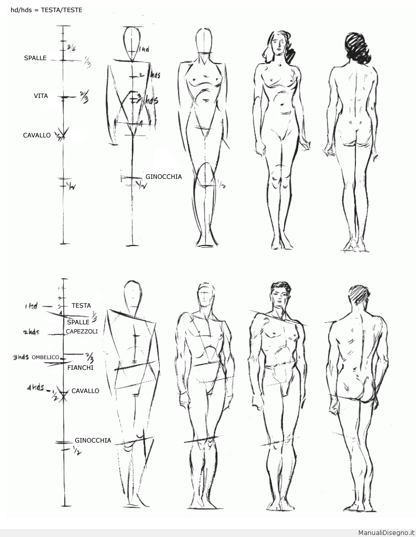 figure-drawing-andrew-loomis-008-proporzioni | Drawing | Pinterest ...
