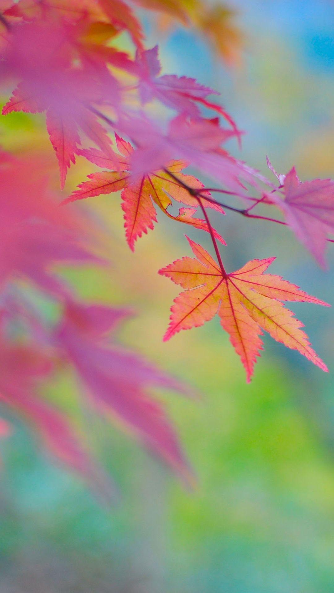 Fondos De Pantalla Suenos Buscar Con Google Autumn Leaves Wallpaper Autumn Leaves Background Fall Wallpaper