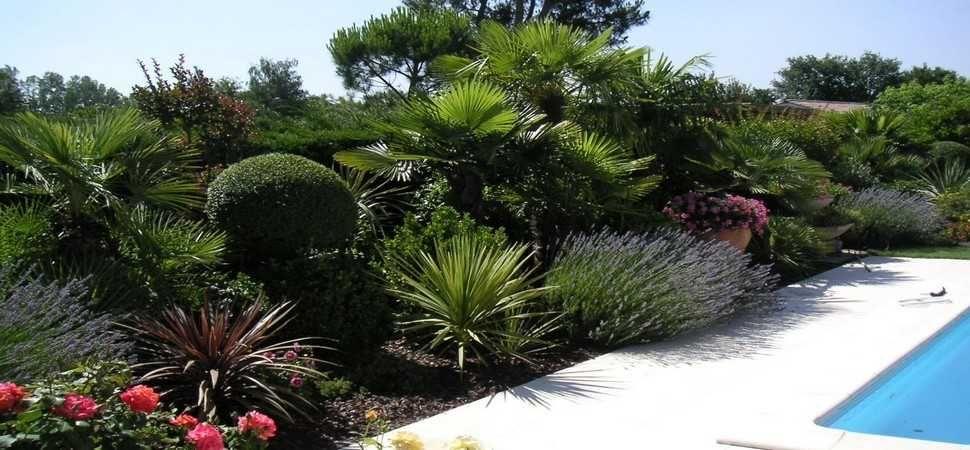 R sultat de recherche d 39 images pour massif olivier palmier ext rieur vernaison pinterest - Massif avec palmier ...