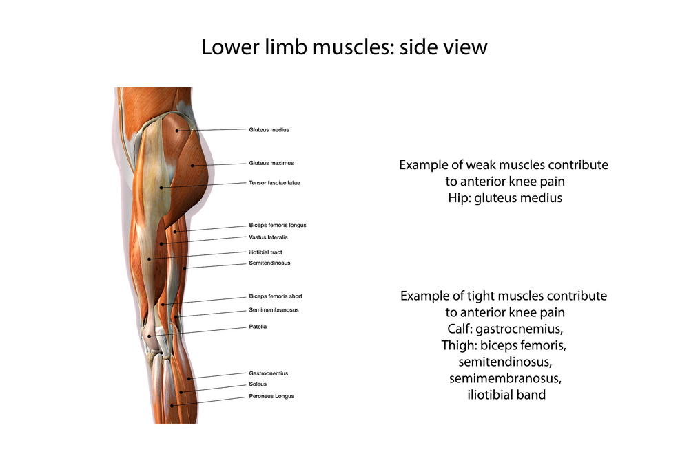 47++ Tight tendon behind knee ideas