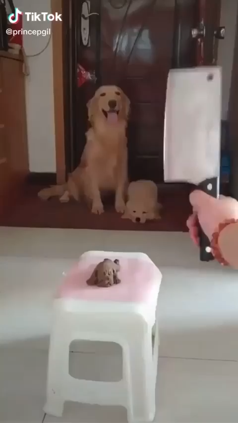 Photo of Funny Dogs 🐶 Reacting When Watching A Dog Cake Cut 😂