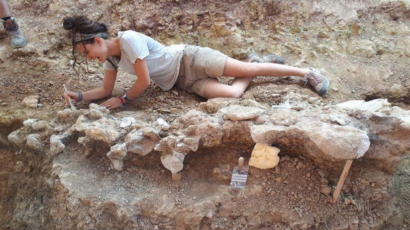 Hallan En España Restos De Dinosaurios De Unos 145 Millones De Años De Antigüedad España Burgos Dinosaurios