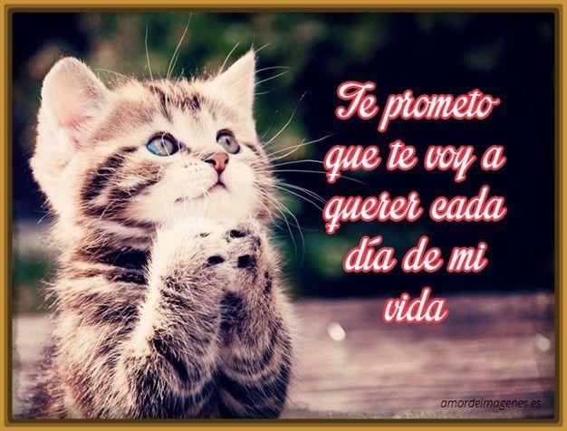 Gatostiernosconfrasesbonitasdeamor Frases De Amor