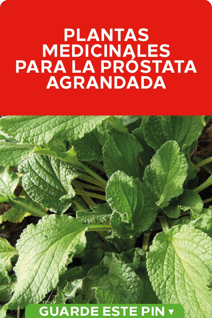 prostata plantas medicinales