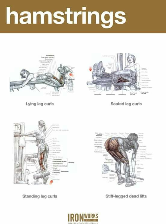 how to build your hamstrings