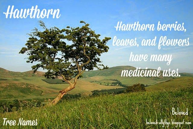Tree Names: Hawthorn