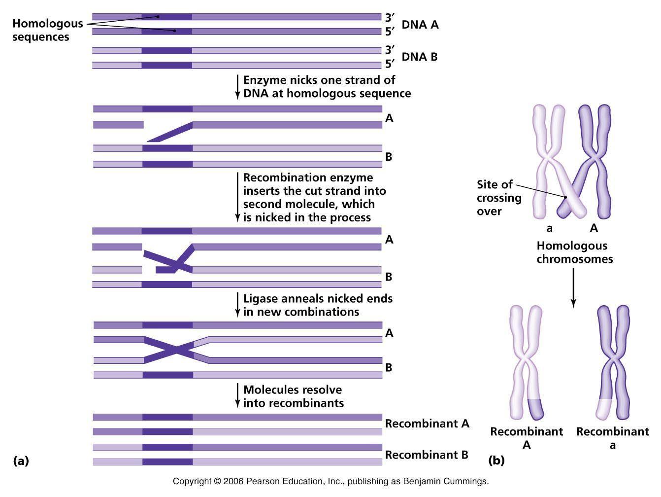 Microbiology, Molecular,