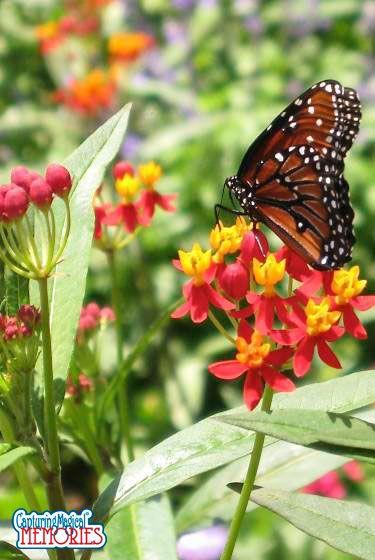 Epcot International Flower and Garden Festival - Tinker Bell's Butterfly House