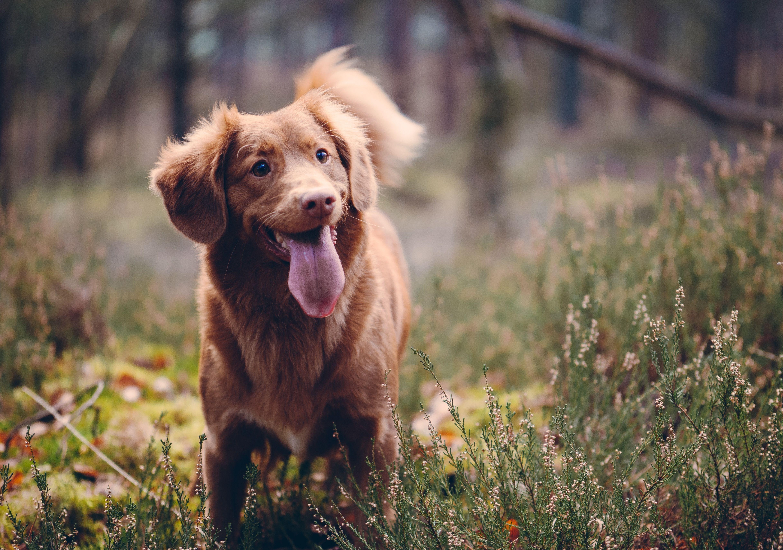 Training Muss Spass Machen Belohnt Den Fleiss Eurer Fellnasen Mit Unseren Naturlichen Trainingssnacks Https Www Kauartikel Com Hunde Futter Hunde Tiere Hund