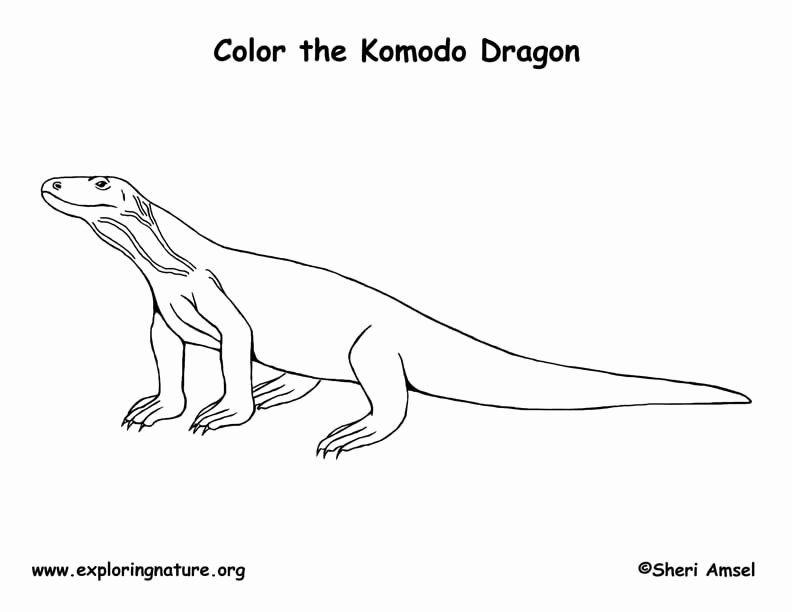 Komodo Dragon Coloring Page Fresh Komodo Dragon Coloring Page