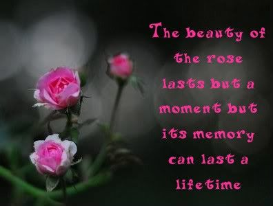 The Beauty Of The Rose Lasts But A Moment But Its Memory Can Last A Lifetime Flower Quotes Rose Flower Quotes Beautiful Flower Quotes