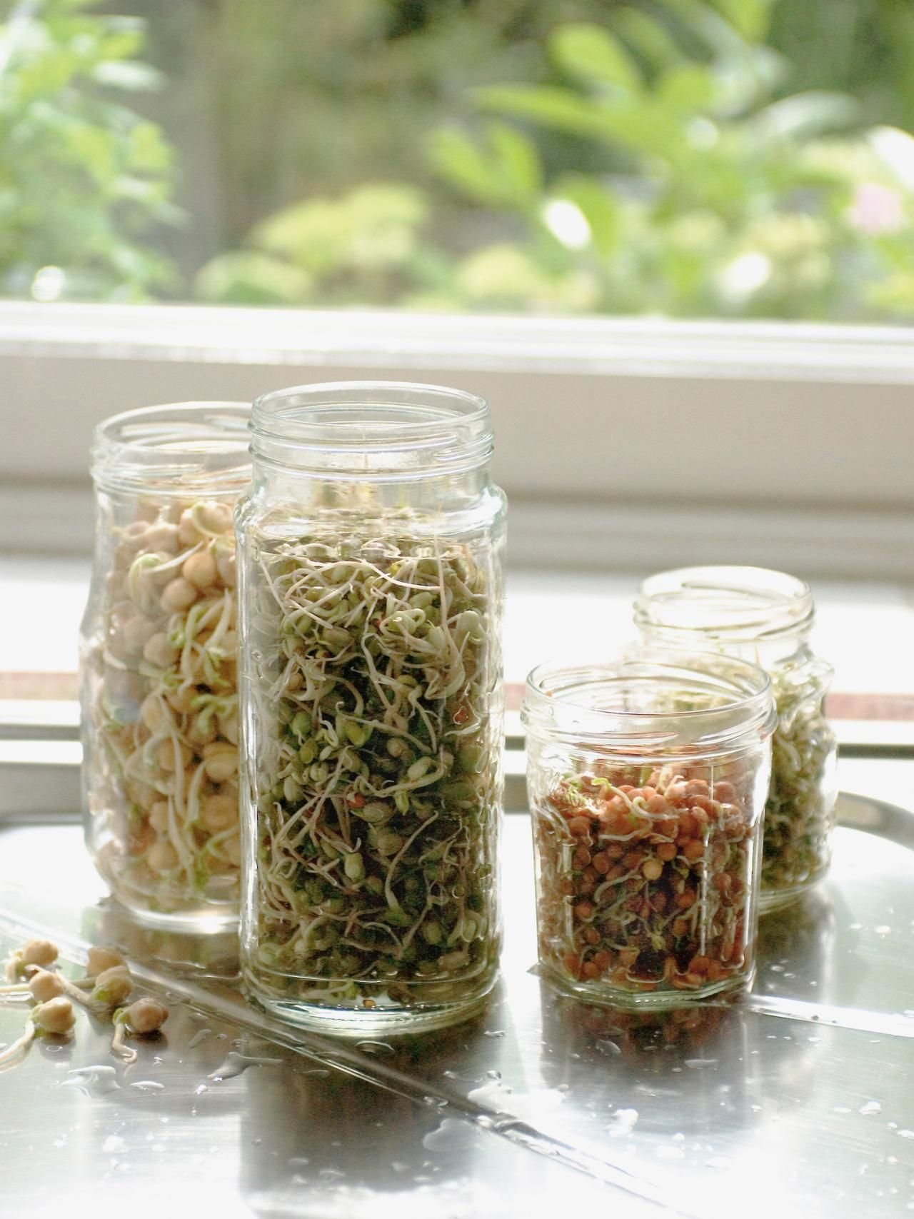 Grow Crunchy Sprouts Indoors Sprouting seeds, Growing