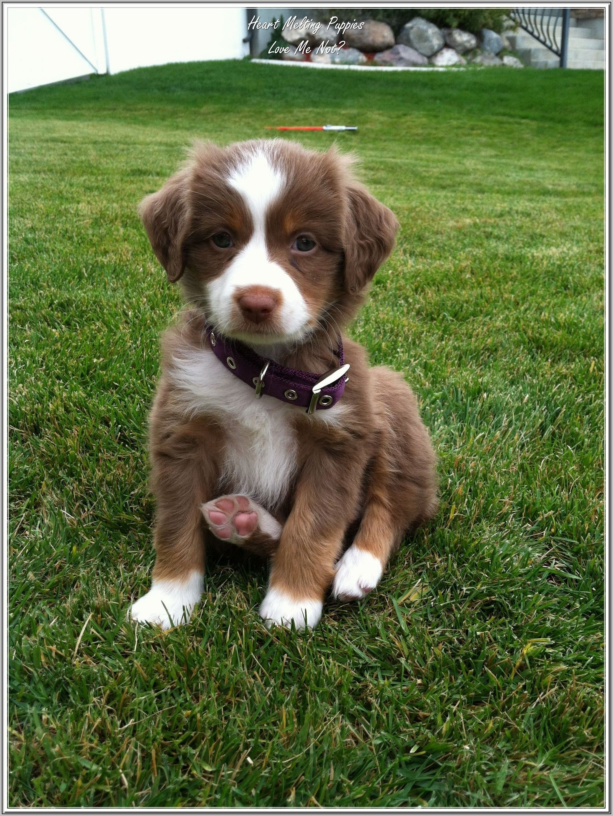 Owning The Perfect Dog For Your Family Cutest Puppy Ever