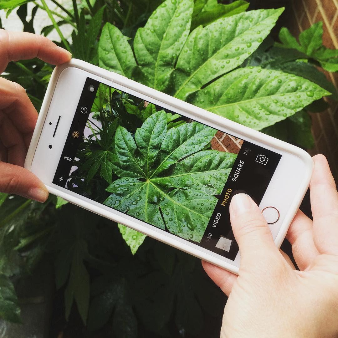 Plantsnap A New App That Identifies Plants HOMES