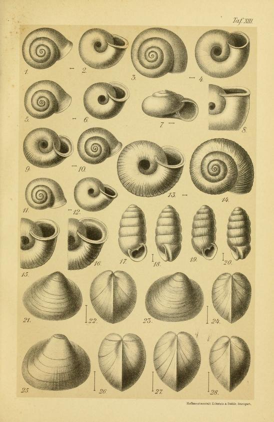 Unsere Land- und Süsswasser-Mollusken : - Biodiversity Heritage Library