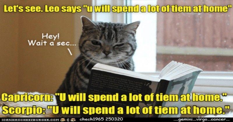 Top 25 Memes Of The Week Cheezburger Users Edition 138 Funny Cat Memes Cat Memes Funny Cats