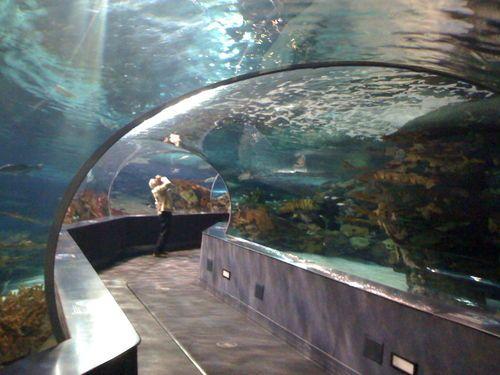 Ripley's Aquarium, Myrtle Beach SC   Myrtle beach vacation