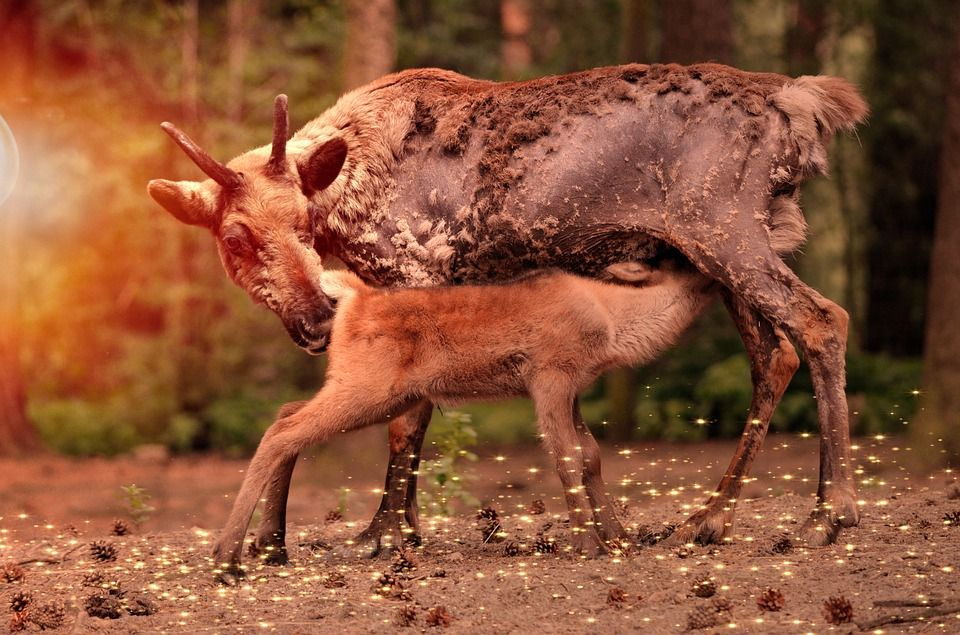 معلومات غريبة عن الحيوانات Animals Young Animal Animals Wild