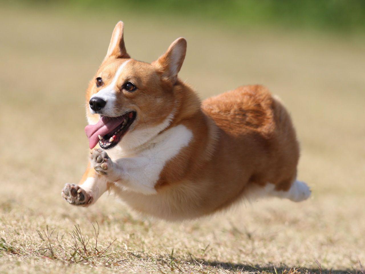 食感と香りがたまらない 犬にくるみを食べさせても大丈夫 Peco ペコ 子犬 画像 犬 かわいいペット