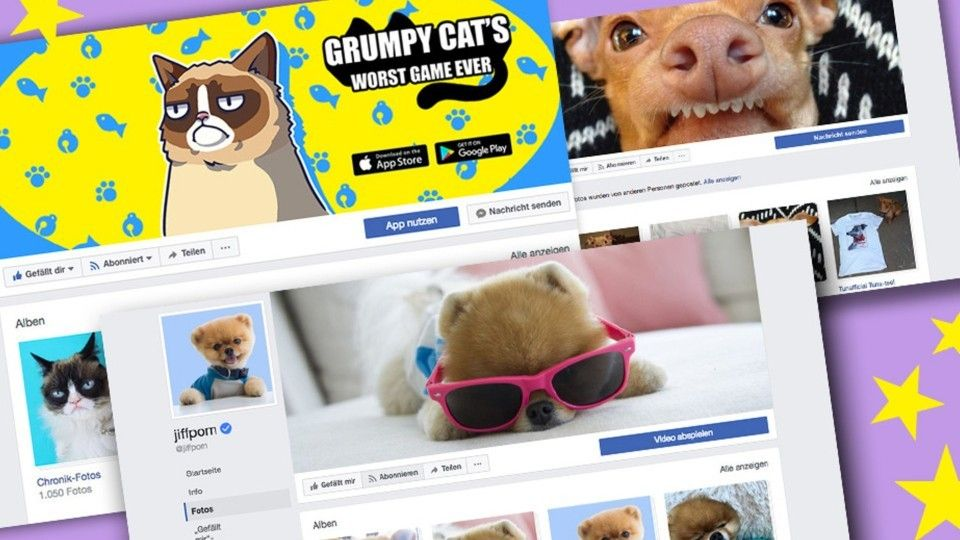 News-Tipp: Facebook Instagram & Co.: Diese Tiere sind Internetstars - http://ift.tt/2pKAe4B #news