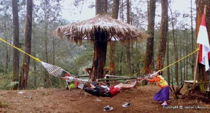 Hutan Pinus Cikole Pal 16 Rekomendasi Wisata Di Bandung
