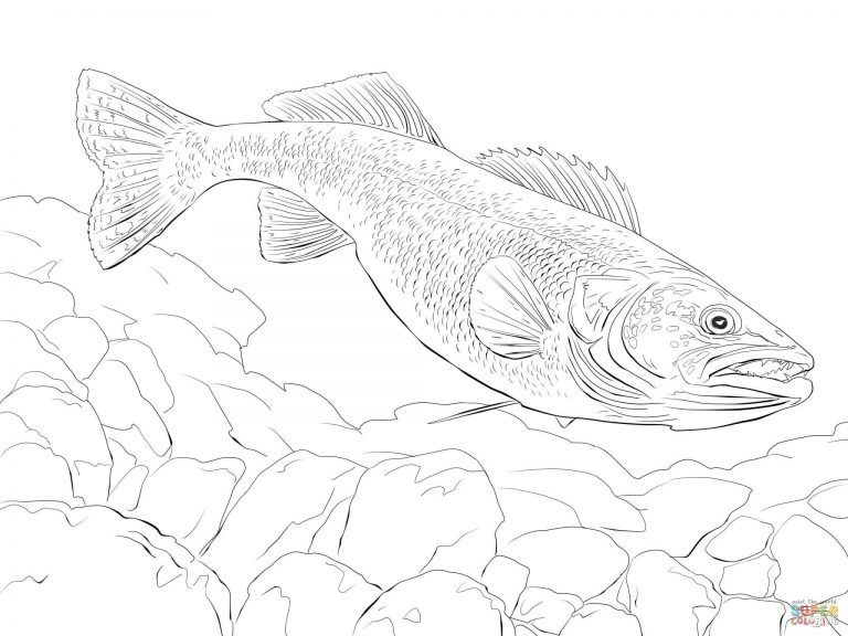 Jax Fish Coloring Page Walleye Regarding Walleye Fish Coloring Pages Printable Free Download Fish Coloring Page Fish Sketch Coloring Pages
